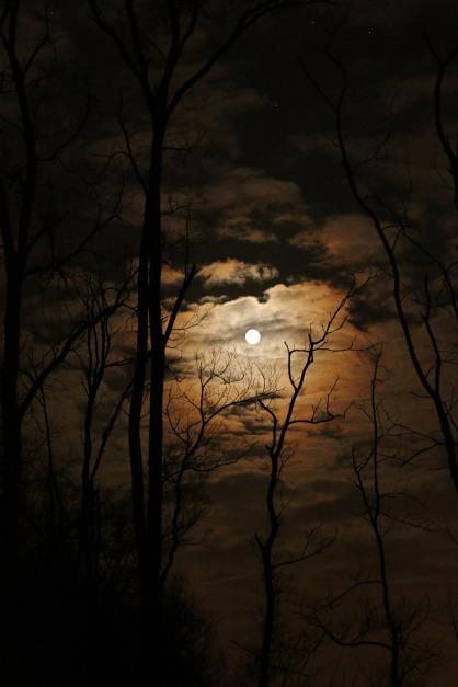 full-moon-1372783_1920